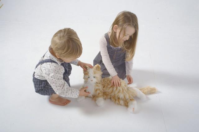 Tabby Companion Cat