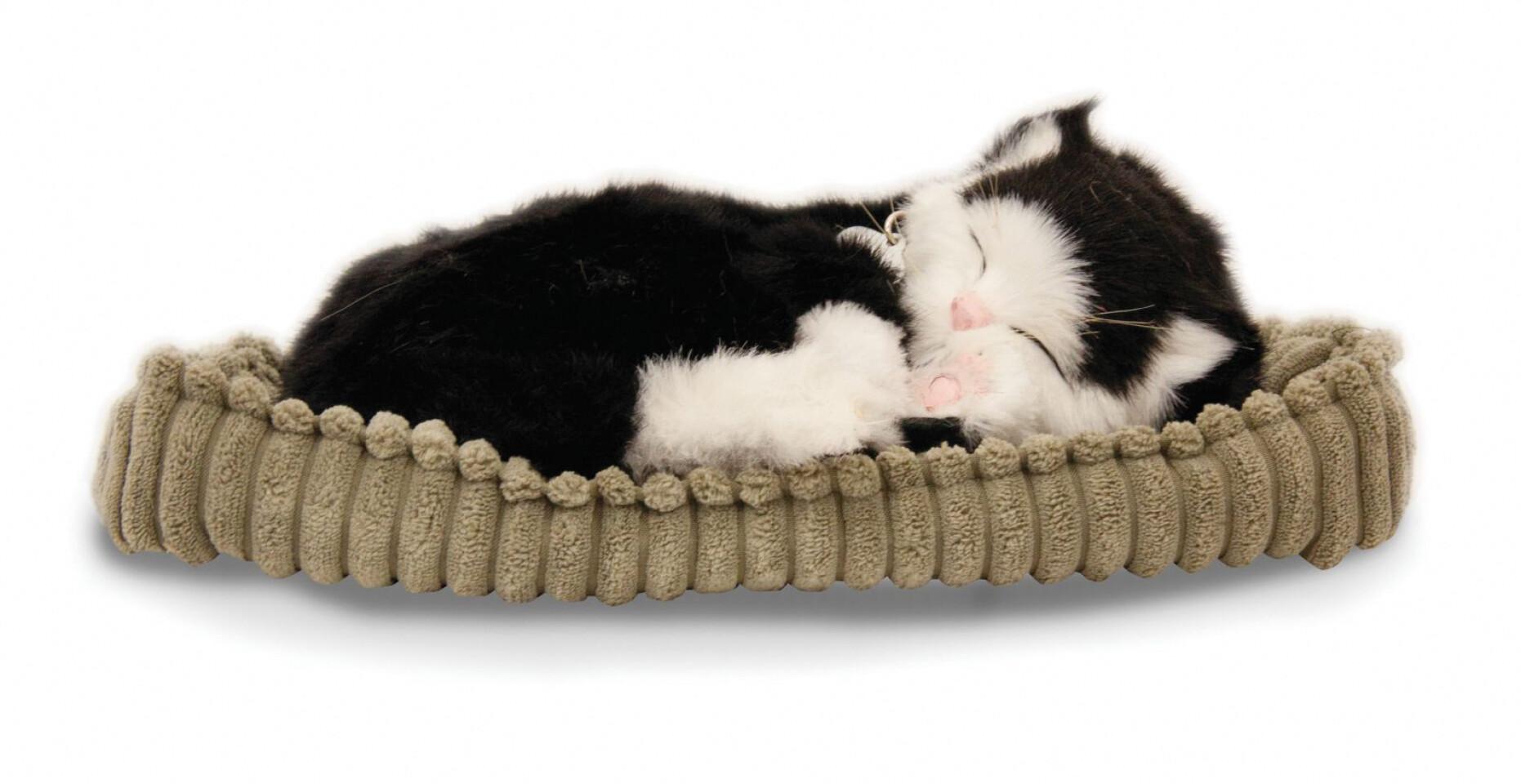 Sovande katt - svart/vit
