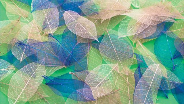 Yulan Leaves - Colourful Sensory Toy