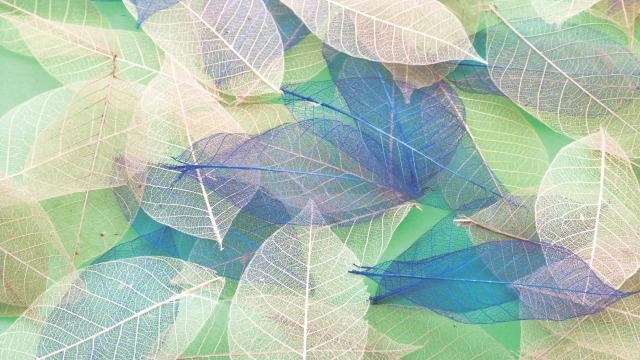Yulan Leaves - Colourful Sensory Toy