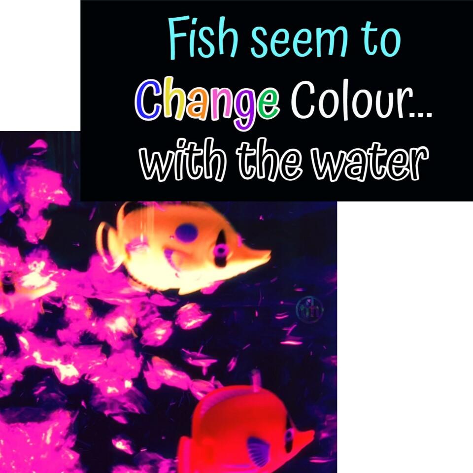 8  Bubble Tube Fish