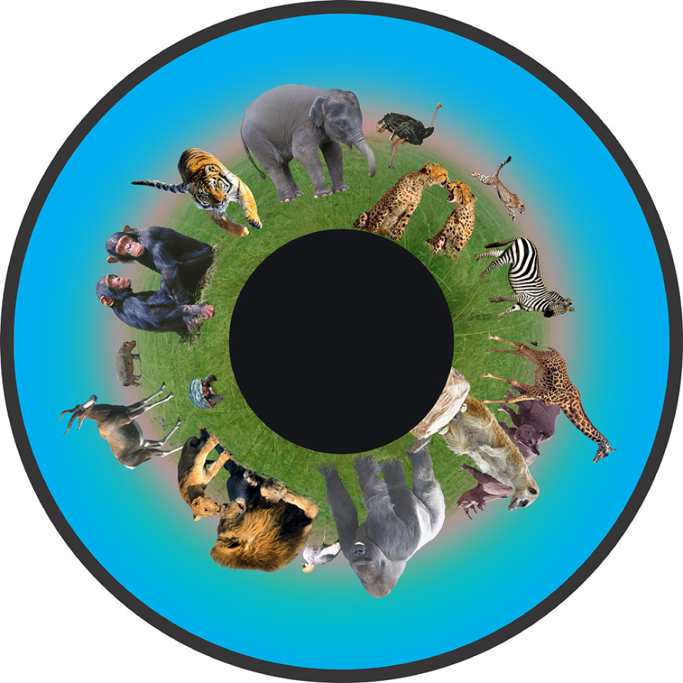 Solar Projector Effects Wheels- Style: Animals Effects Wheel