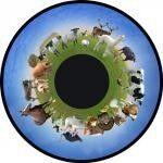 Projector Effects Wheel, Farm Animals