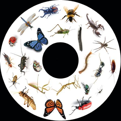 Magnetic Wheel, Insects and Bugs