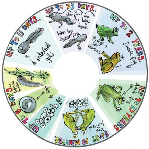 6 Inch Projector Wheel - Frogs Scene