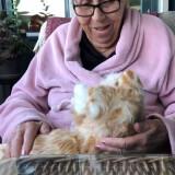 Rödlätt kompis katt - digitalt terapidjur