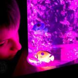 "Water Bubble Column, Calming Aquarium, Small 48"" tall"