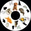 SNAP Projector Wheels- Style: Pets