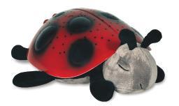 Star Ladybug