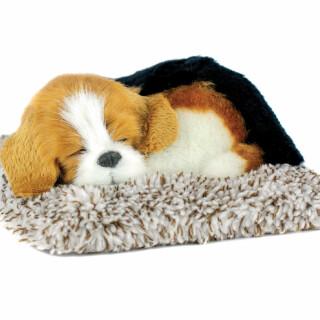 Mini Beagle Puppy