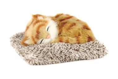 Mini Orange Tabby Kitten