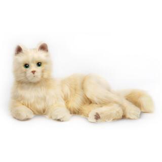 Beli maček