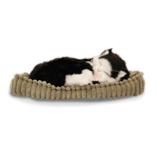 Sleeping B&W Cat