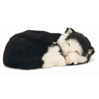 Speči maček