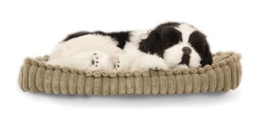 Sovande hund Border Colli