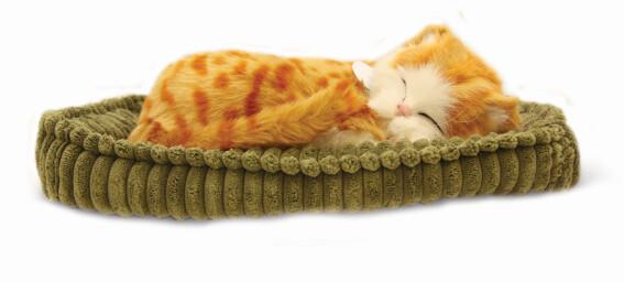Sovande katt - röd