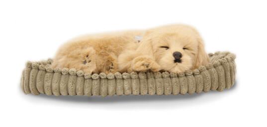 Sovande hund - retriver