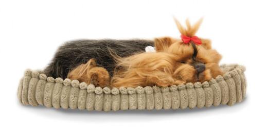 Sovande hund Yorkie