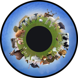 Solar Projector Effects Wheels- Style: Farm Animals Effects Wheel