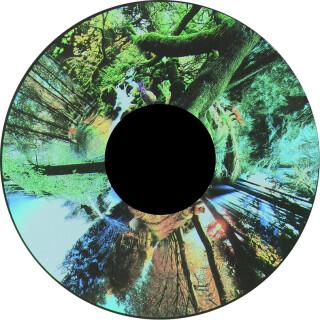 Seasoned Woods - Projection Sensory Toy