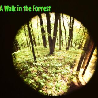 Effects Wheel, Seasonal Forest