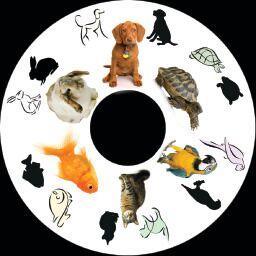 6 Inch Projector Wheel - Pets Scene