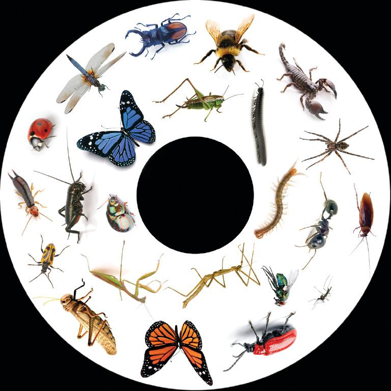 6 Inch Projector Wheel - Insects Scene